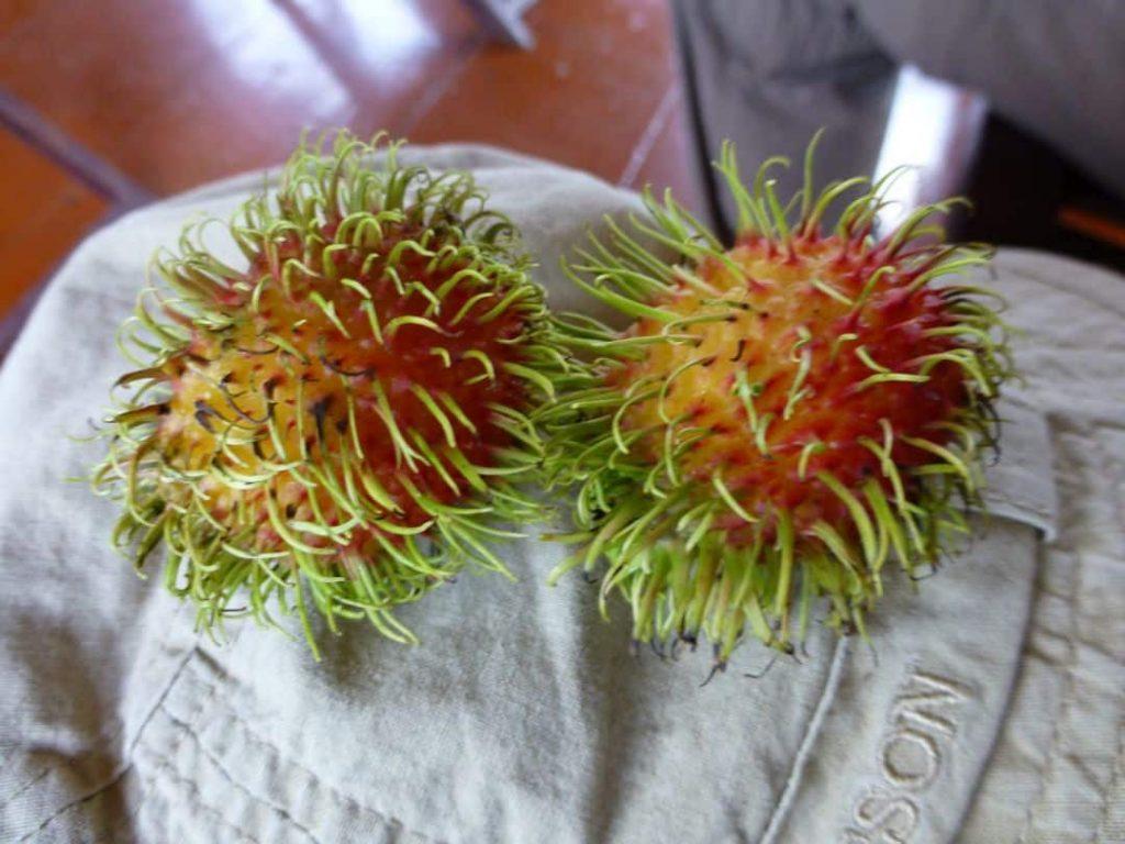 Eine Lycheeart: Rambutan Schwimmende Märkte. Südvietnam 2018