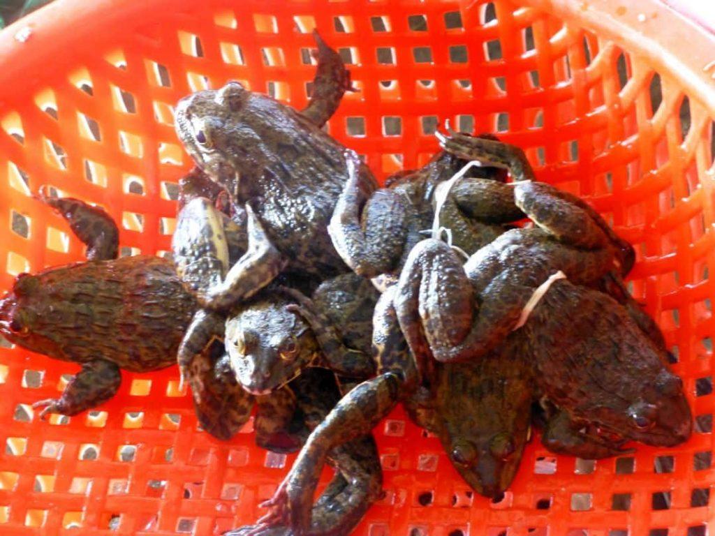 Schwimmende Märkte: Froschschenkel. Südvietnam. 2014